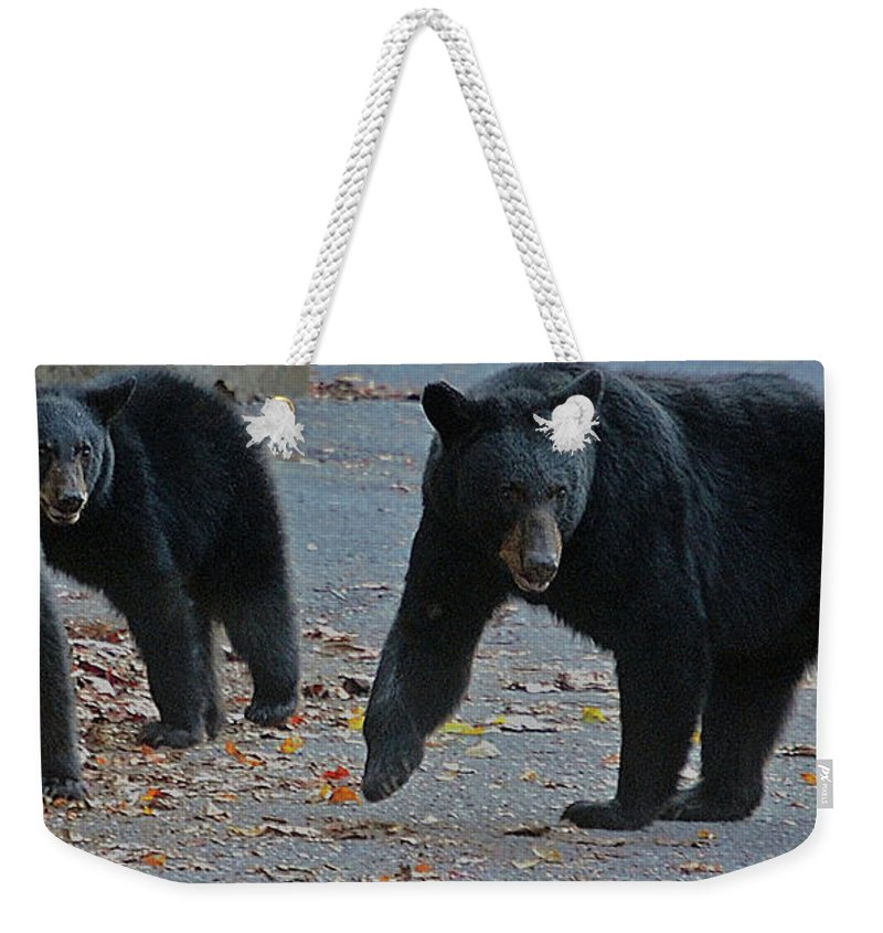Bears Weekender Tote Bag featuring the photograph Guarding Her Cubs by DigiArt Diaries by Vicky B Fuller