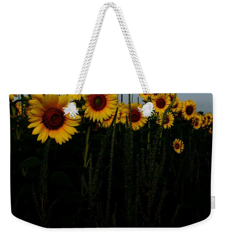 Sunflowers Weekender Tote Bag featuring the photograph Guide Me by Amanda Barcon