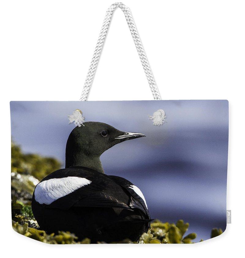 Iles Mingans Weekender Tote Bag featuring the photograph Guillemot A Miroir by Marie Elise Mathieu