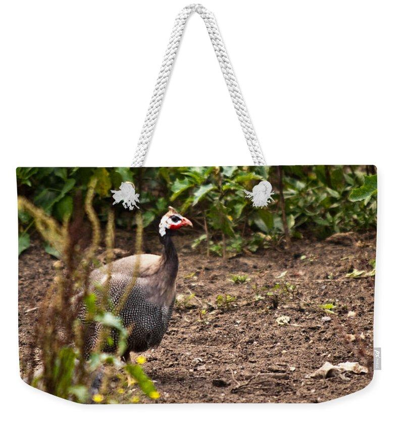 Guinea Weekender Tote Bag featuring the photograph Guinea Fowl 1 by Douglas Barnett