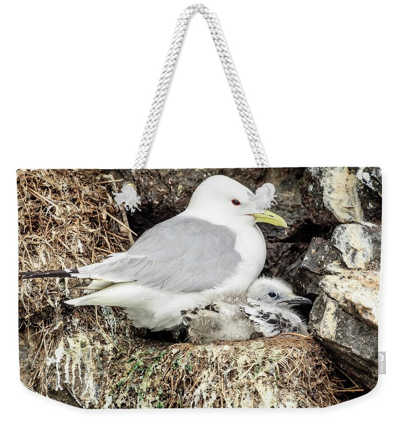 Alaska Weekender Tote Bag featuring the photograph Gull Adult And Chick On Cliff by Joni Eskridge