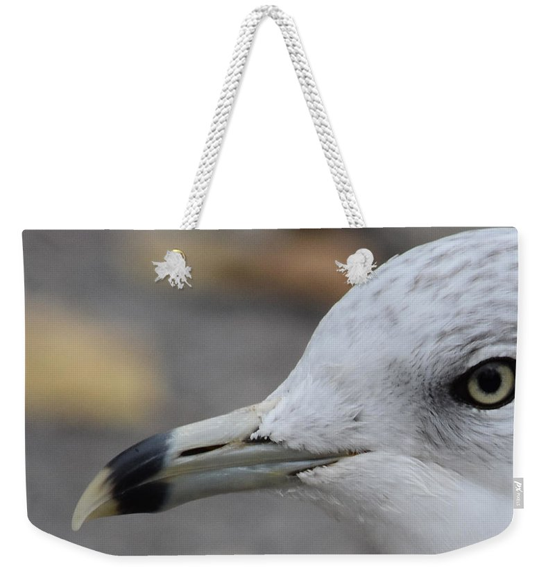 Seagull Weekender Tote Bag featuring the photograph Gull Eye by Maria Keady