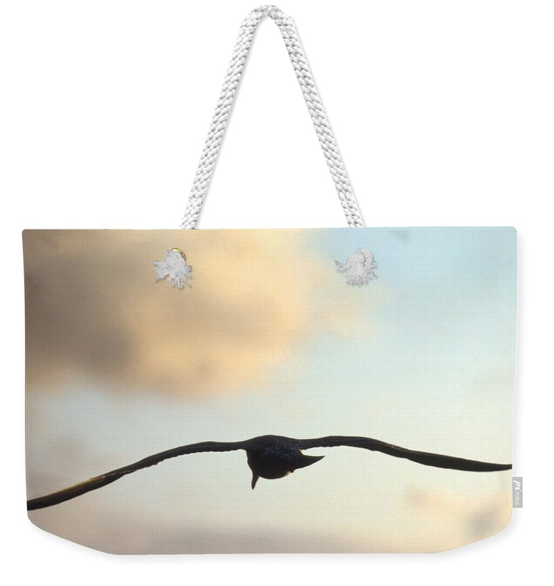 Bird Weekender Tote Bag featuring the photograph Gull by Jerry McElroy