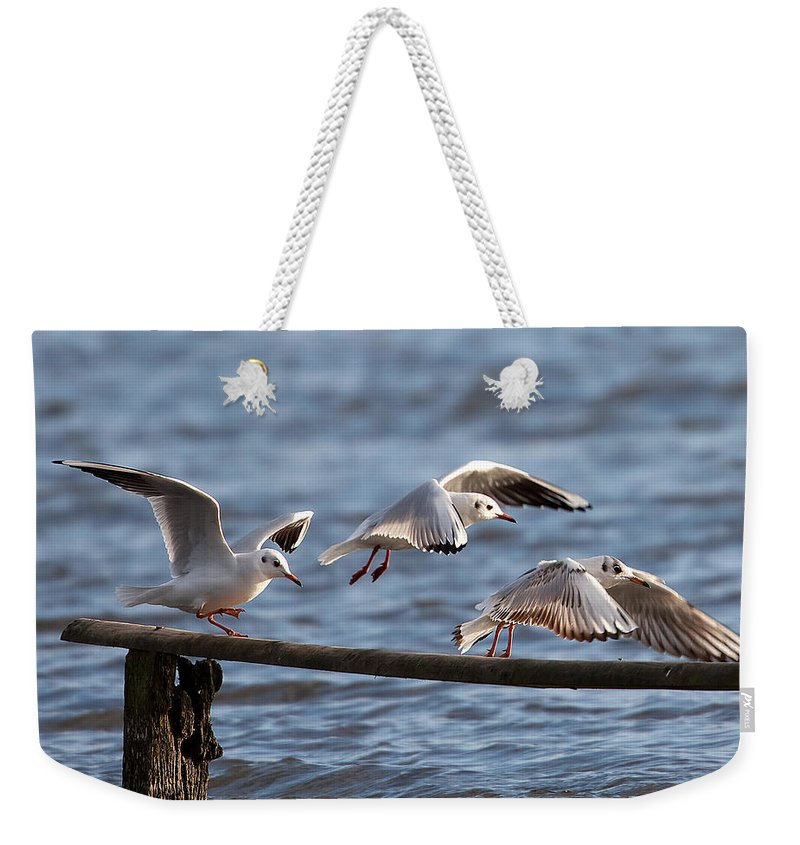 Gulls Weekender Tote Bag featuring the photograph Gulls by Bob Kemp