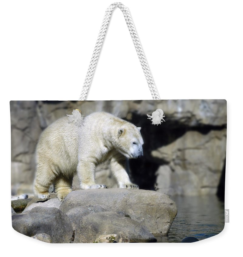 Memphis Zoo Weekender Tote Bag featuring the photograph Habitat - Memphis Zoo by D'Arcy Evans