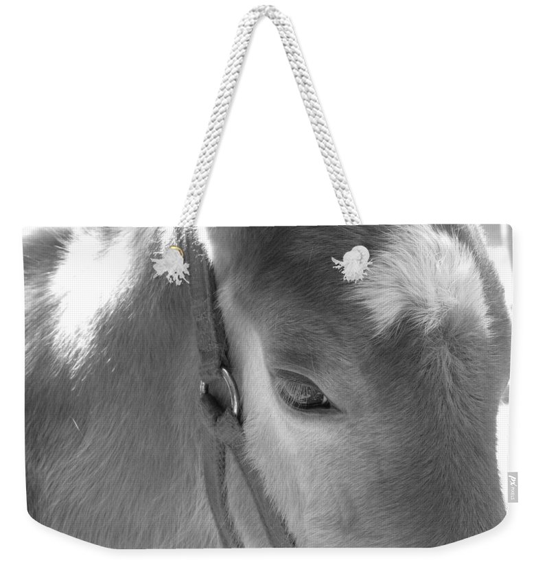 Horse Weekender Tote Bag featuring the photograph Haflinger Colt by Sarah Houser
