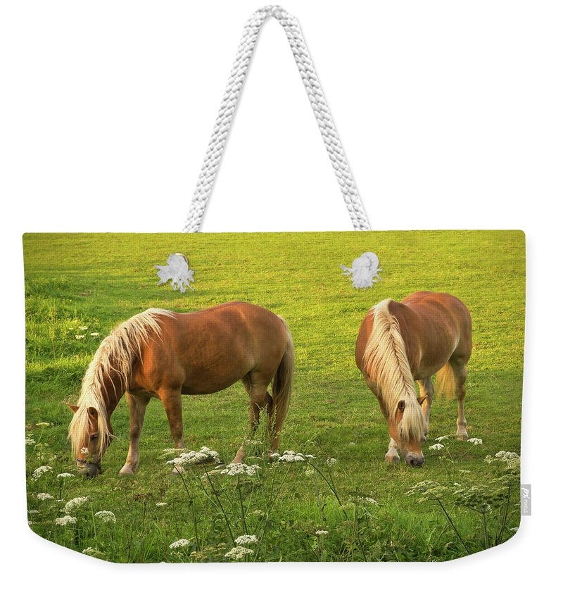 Haflingers Weekender Tote Bag featuring the photograph Haflingers by Wim Lanclus