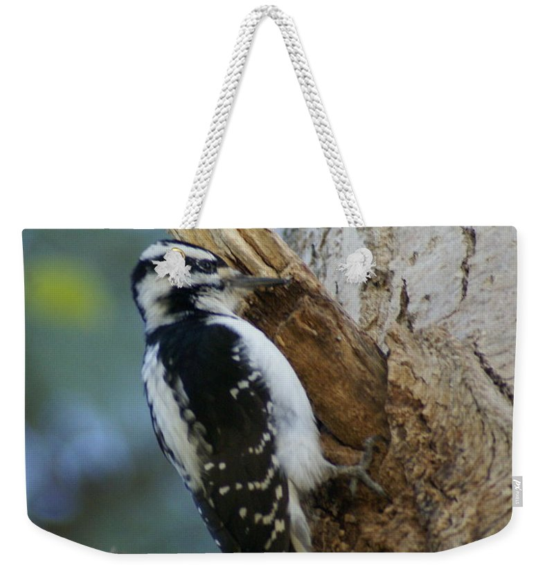 Birds Weekender Tote Bag featuring the photograph Hairy Woodpecker by Ben Upham III