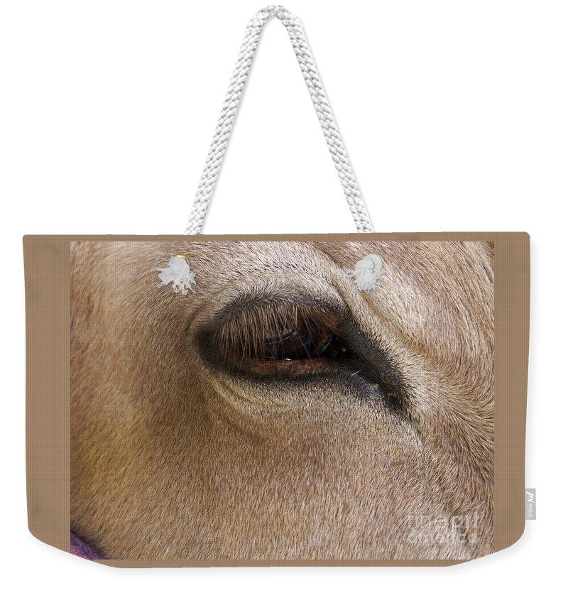 Calf Weekender Tote Bag featuring the photograph Half Asleep by Ann Horn
