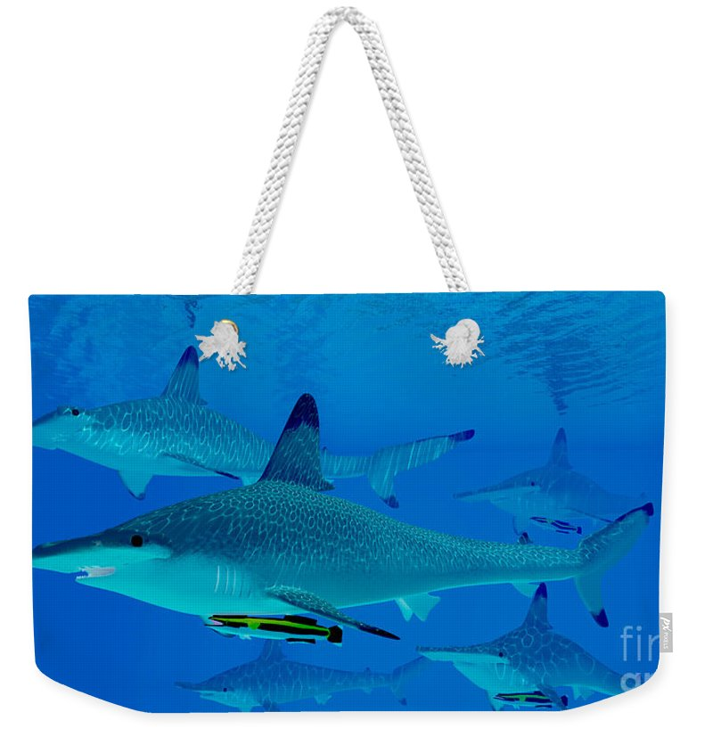 Hammerhead Shark Weekender Tote Bag featuring the painting Hammerhead Sharks by Corey Ford