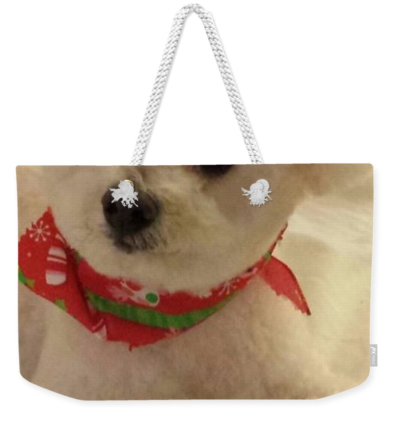Small White Dog With Brown Eyes Weekender Tote Bag featuring the photograph Hammie by Harriet Harding