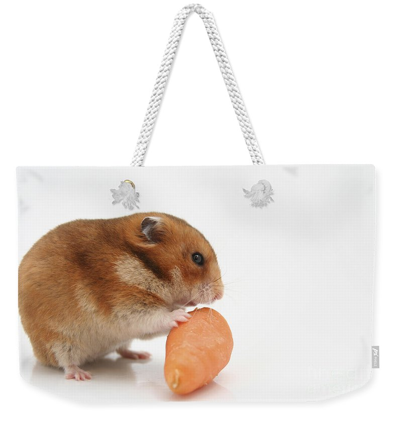 Hamster Weekender Tote Bag featuring the photograph Hamster Eating A Carrot by Yedidya yos mizrachi