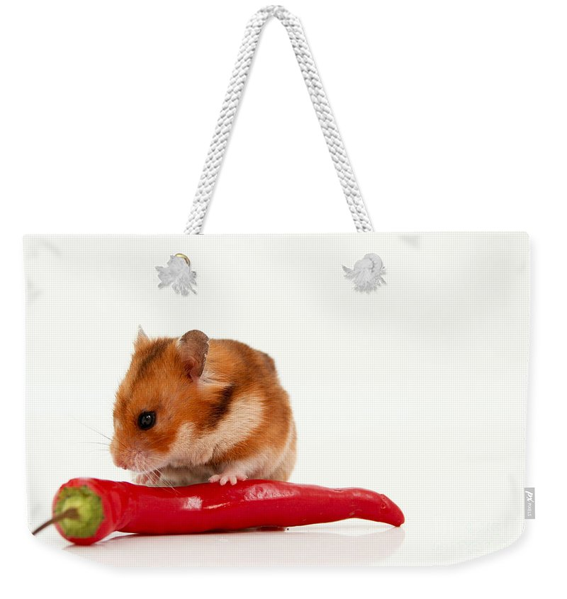 Hamster Weekender Tote Bag featuring the photograph Hamster Eating A Red Hot Pepper by Yedidya yos mizrachi