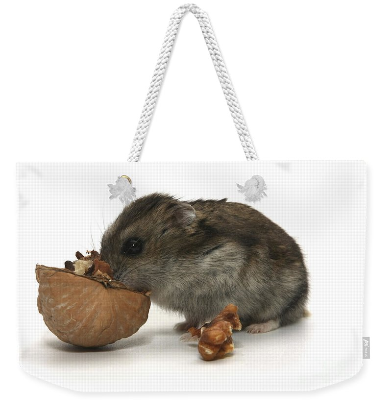Hamster Weekender Tote Bag featuring the photograph Hamster Eating A Walnut by Yedidya yos mizrachi
