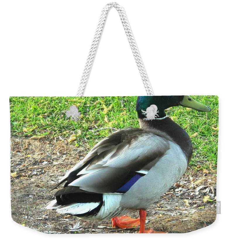 Mallard Weekender Tote Bag featuring the photograph Handsome Fellow by Ian MacDonald