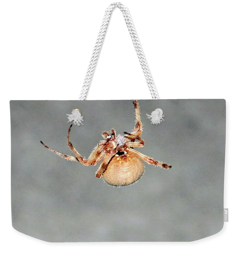 Spider Weekender Tote Bag featuring the photograph Hanging By A Thread by Kristin Elmquist