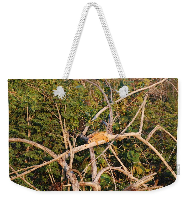Iguana Weekender Tote Bag featuring the photograph Hanging Iguana by Rob Hans