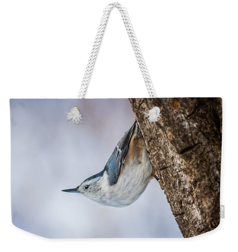 Animals Weekender Tote Bag featuring the photograph Hanging Nuthatch by Rikk Flohr