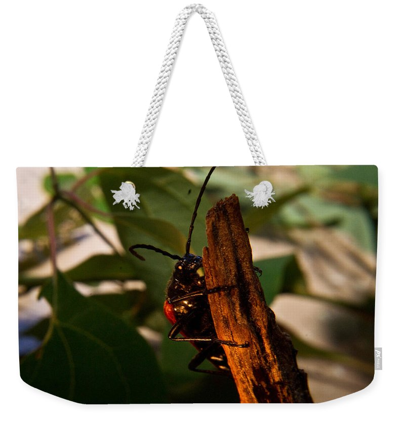Beetle Weekender Tote Bag featuring the photograph Hanging On For Life by Douglas Barnett