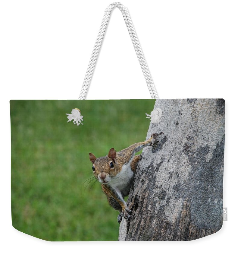 Squirrel Weekender Tote Bag featuring the photograph Hanging On by Rob Hans