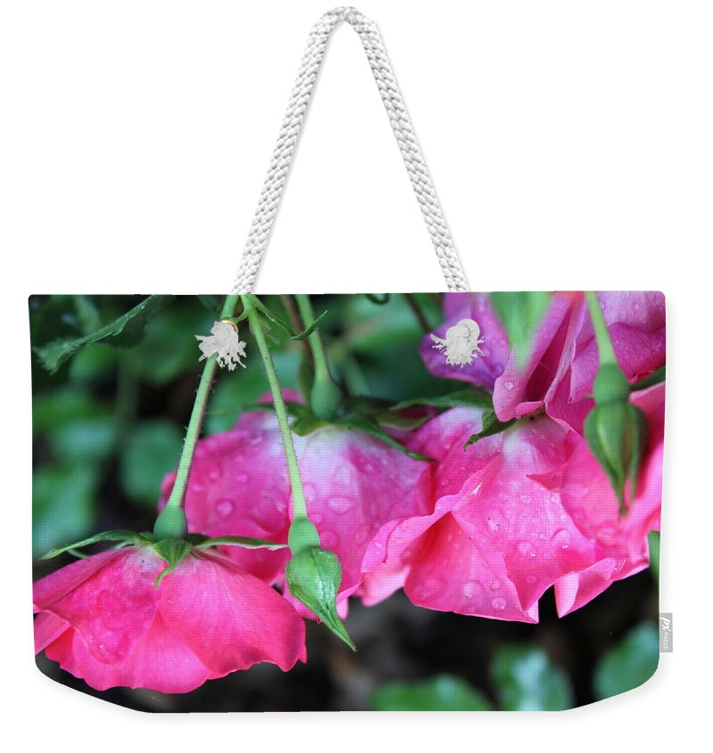 Roses Weekender Tote Bag featuring the photograph Hanging Roses by Lauri Novak