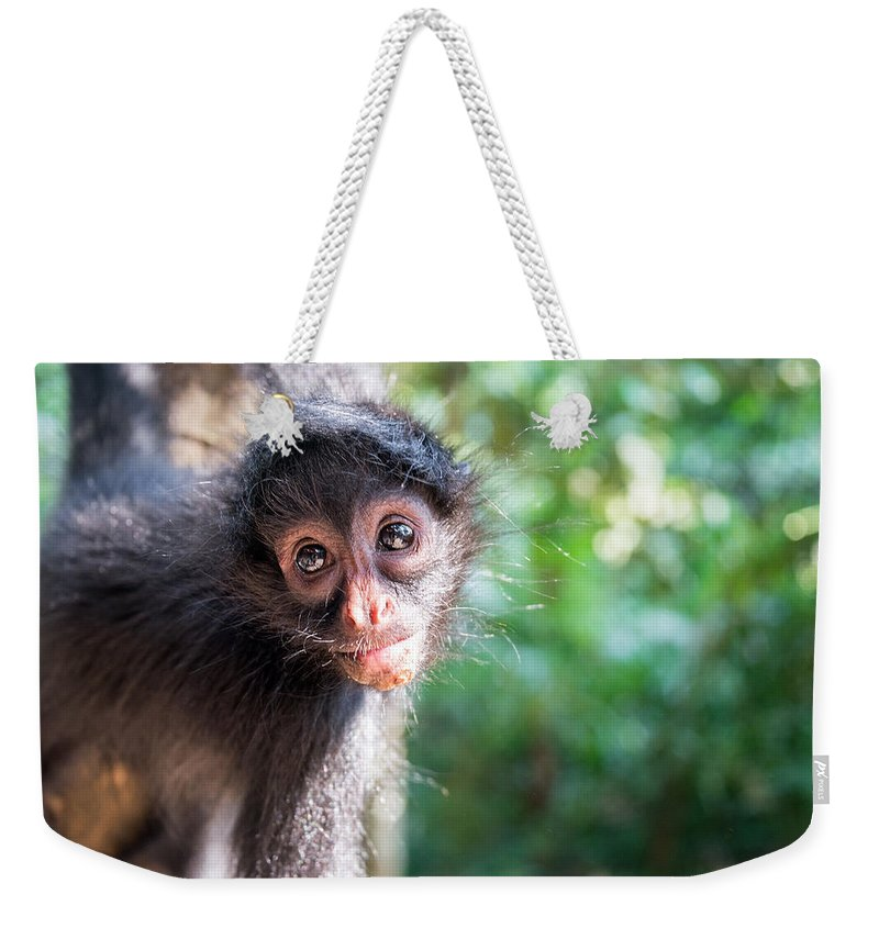 Spider Weekender Tote Bag featuring the photograph Hanging Spider Monkey by Jess Kraft