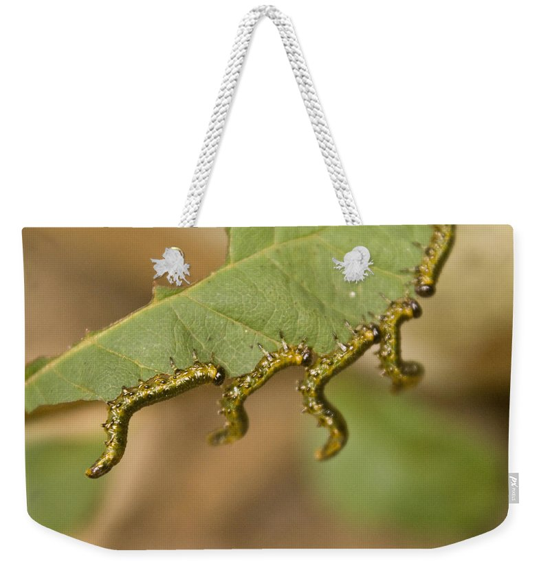 Larvae Weekender Tote Bag featuring the photograph Hanging There by Douglas Barnett