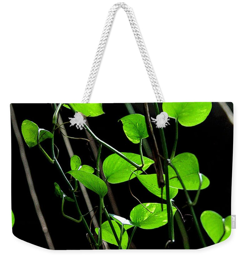 Plants Weekender Tote Bag featuring the photograph Hanging Vines by Joe Kozlowski