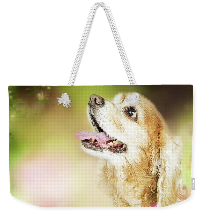 Dog Weekender Tote Bag featuring the photograph Happy Dog Outdoors Looking At Bee by Susan Schmitz