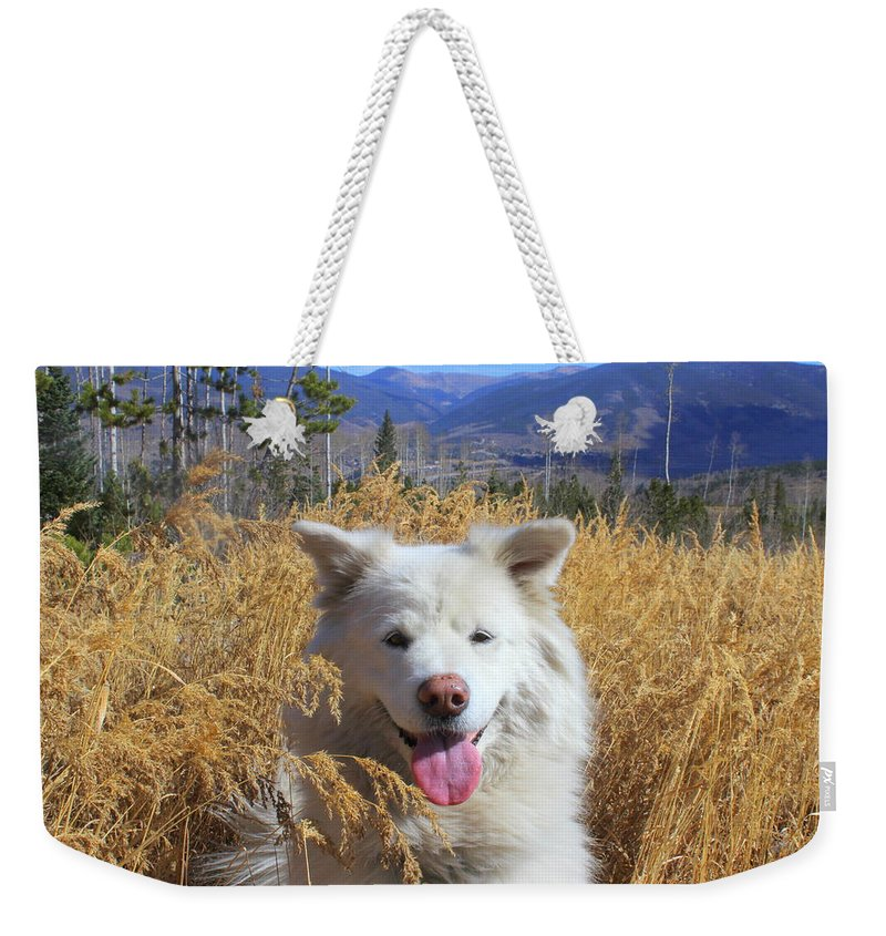 Samoyed Weekender Tote Bag featuring the photograph Be The Reason Someone Smiles Today by Fiona Kennard