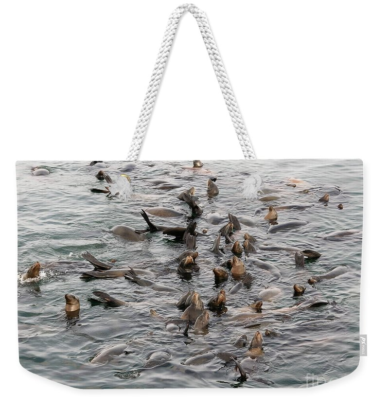 Weekender Tote Bag featuring the photograph Happy Harbour Seals by Carol Groenen