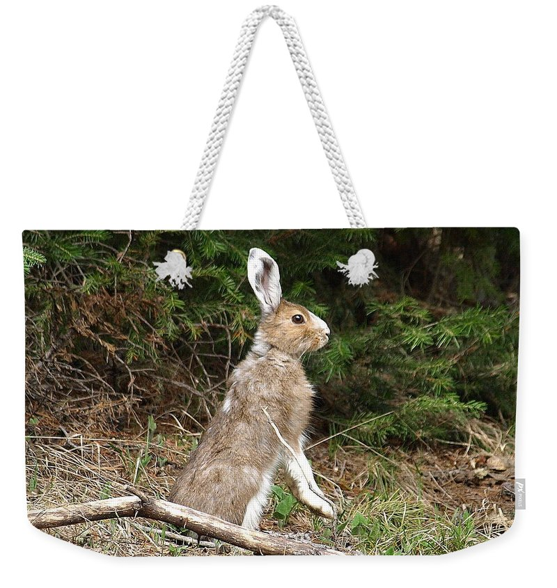 Rabbit Weekender Tote Bag featuring the photograph Hare That by DeeLon Merritt