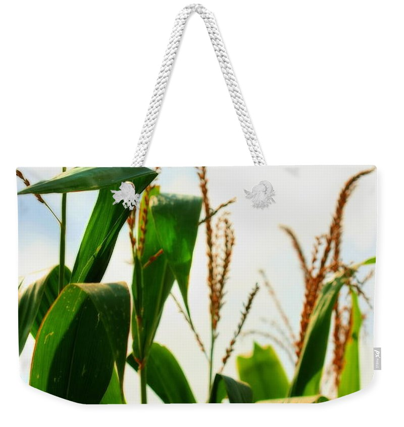 Farm Weekender Tote Bag featuring the photograph Harvest Corn Stalks by Angela Rath