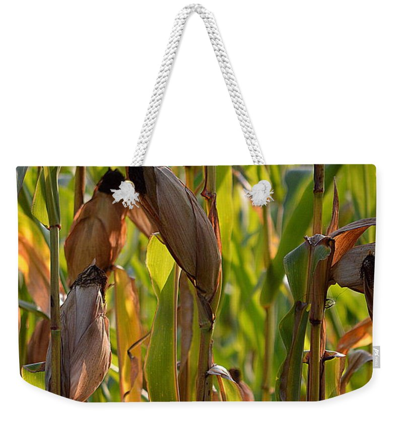 Corn Weekender Tote Bag featuring the photograph Harvest Time by Karin Everhart