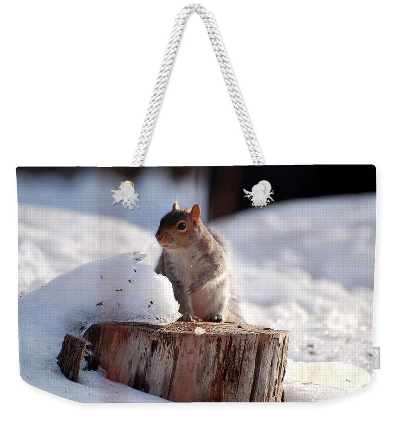 Squirrel Weekender Tote Bag featuring the photograph Has Anyone Seen My Nuts by Lori Tambakis