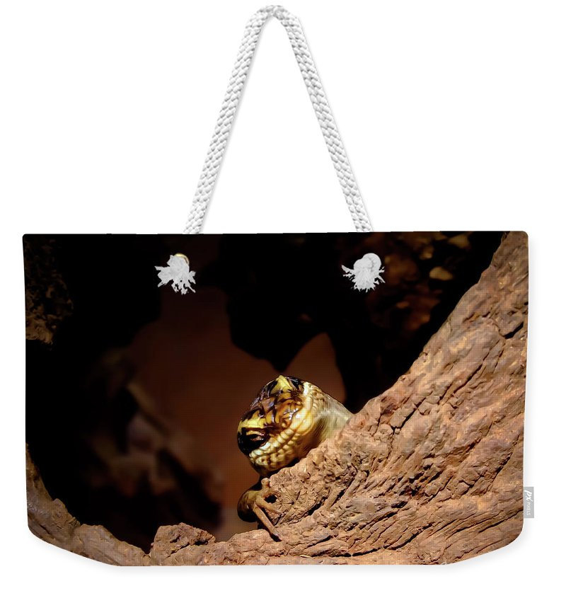 Skink Weekender Tote Bag featuring the photograph Have A Nice Day by Tracey Beer
