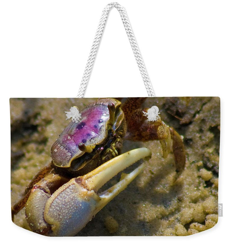 Topsail Island Weekender Tote Bag featuring the photograph Have You Seen My Fiddle by Betsy Knapp