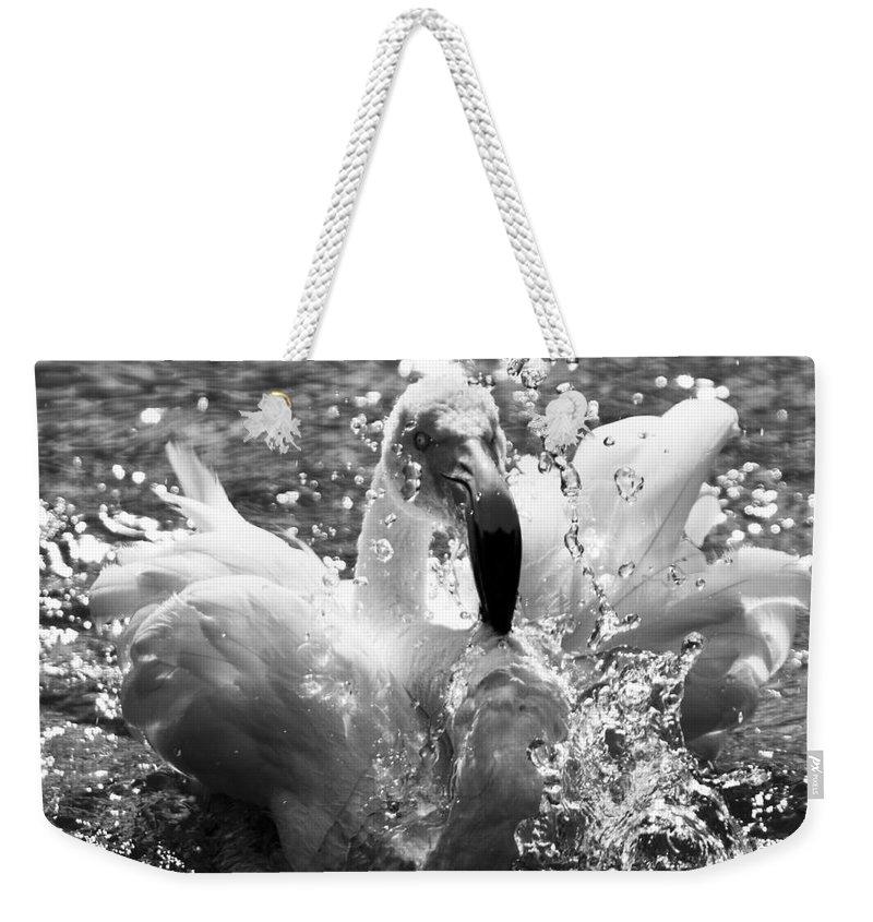 Flamingo Weekender Tote Bag featuring the photograph Having A Bath by Angel Ciesniarska