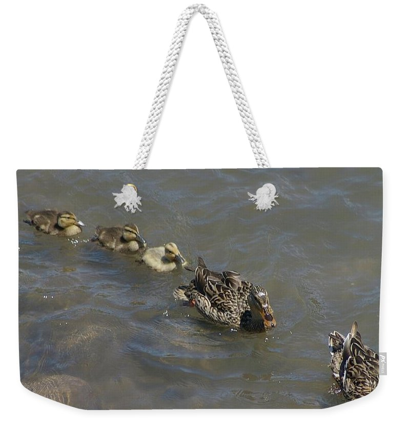 Fowl Weekender Tote Bag featuring the photograph Having Your Duckies In A Row by Jeff Swan