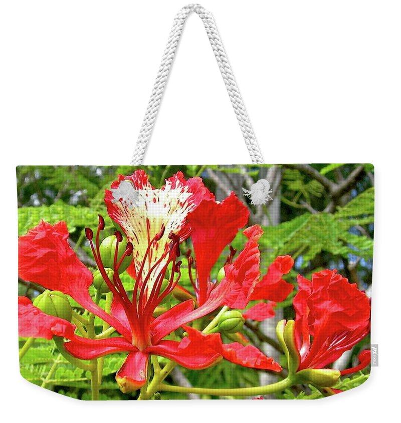 Royal Ponciana Weekender Tote Bag featuring the photograph Hawaiian Royal by James Temple