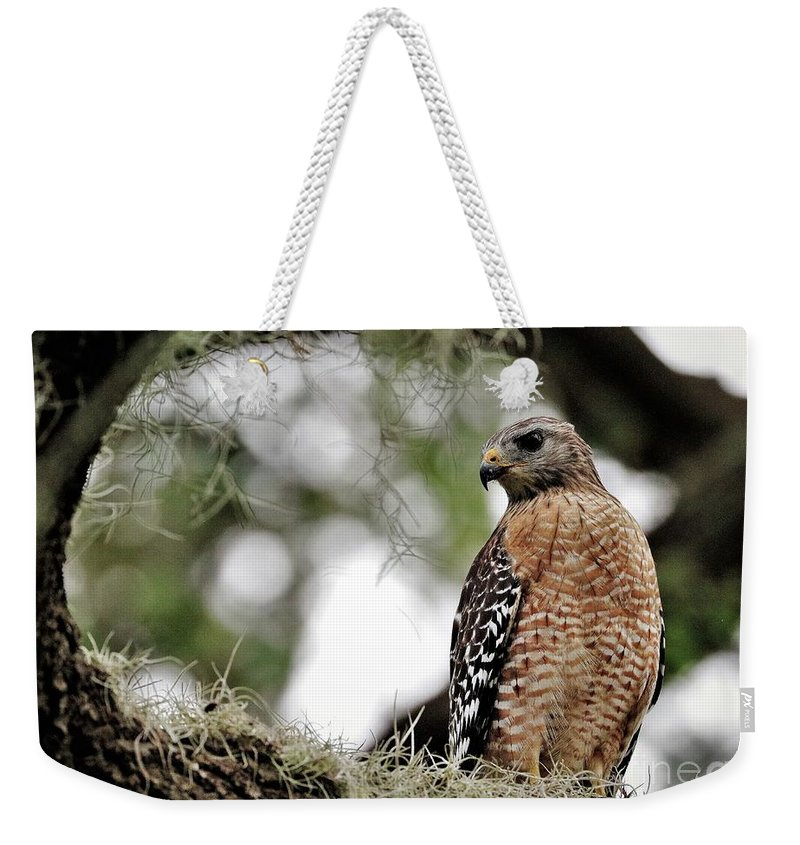 Beautiful Weekender Tote Bag featuring the photograph Hawk On Watch by Diann Fisher