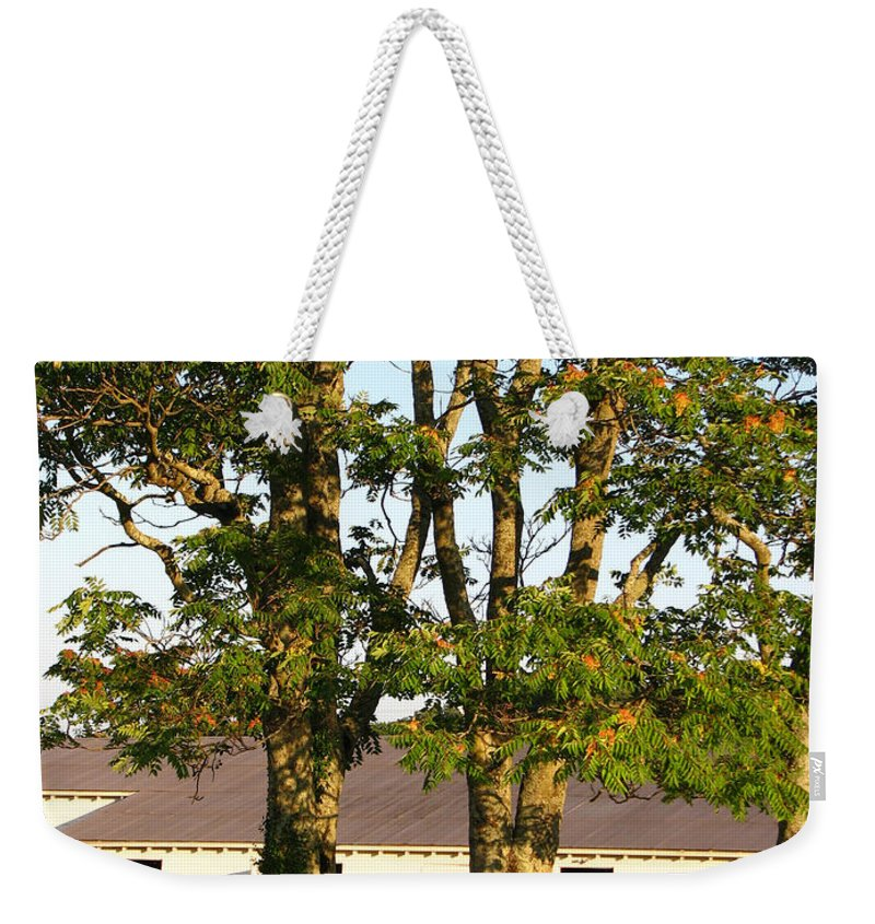 Landscape Weekender Tote Bag featuring the photograph Hay Bales And Trees by Todd Blanchard