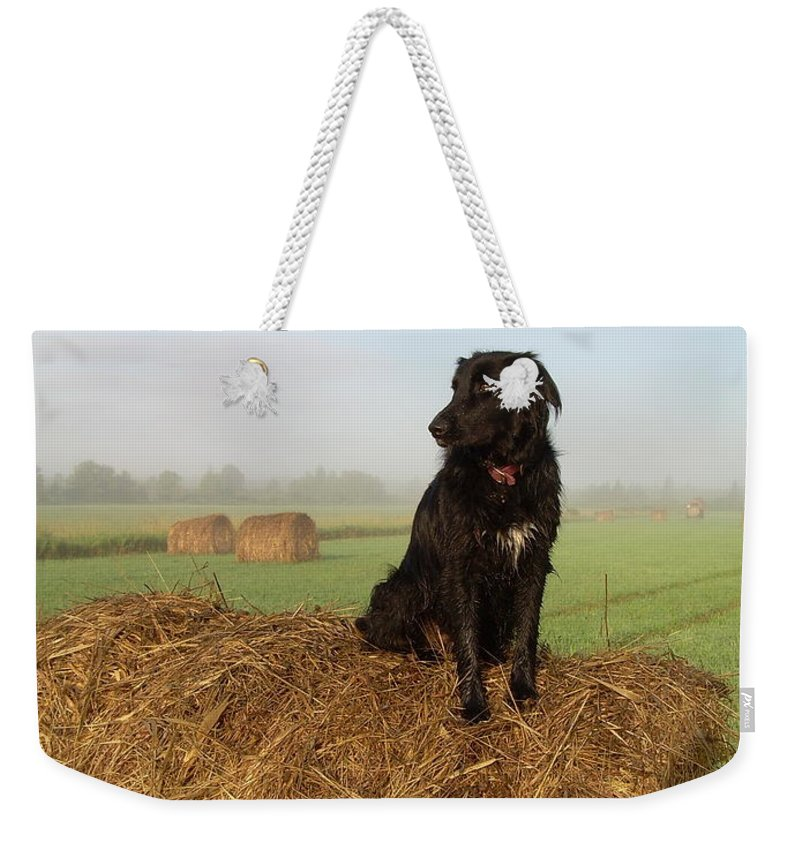 Dog Weekender Tote Bag featuring the photograph Hay There Black Dog by Kent Lorentzen
