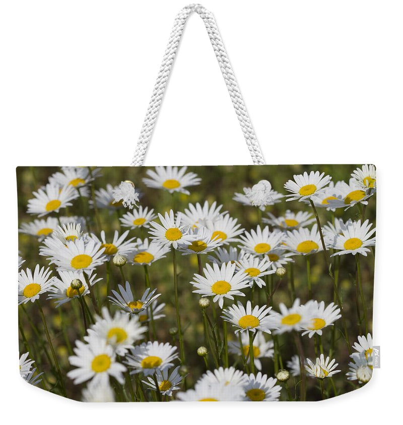 Oxeye Daisies Weekender Tote Bag featuring the photograph He Loves Me Daisies by Kathy Clark