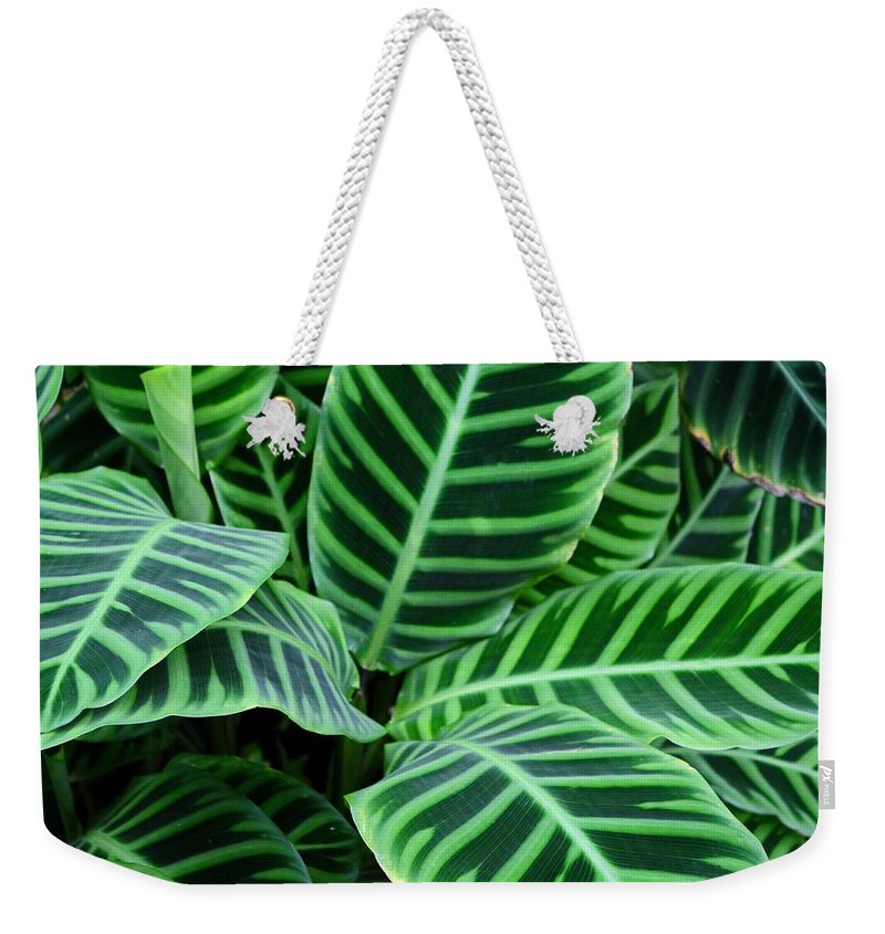 Hosta Weekender Tote Bag featuring the photograph Heart Strings by Michiale Schneider