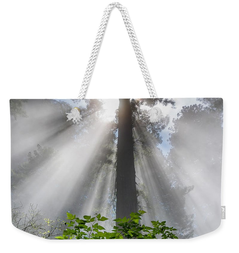 Redwoods Weekender Tote Bag featuring the photograph Heaven's Light by Greg Nyquist