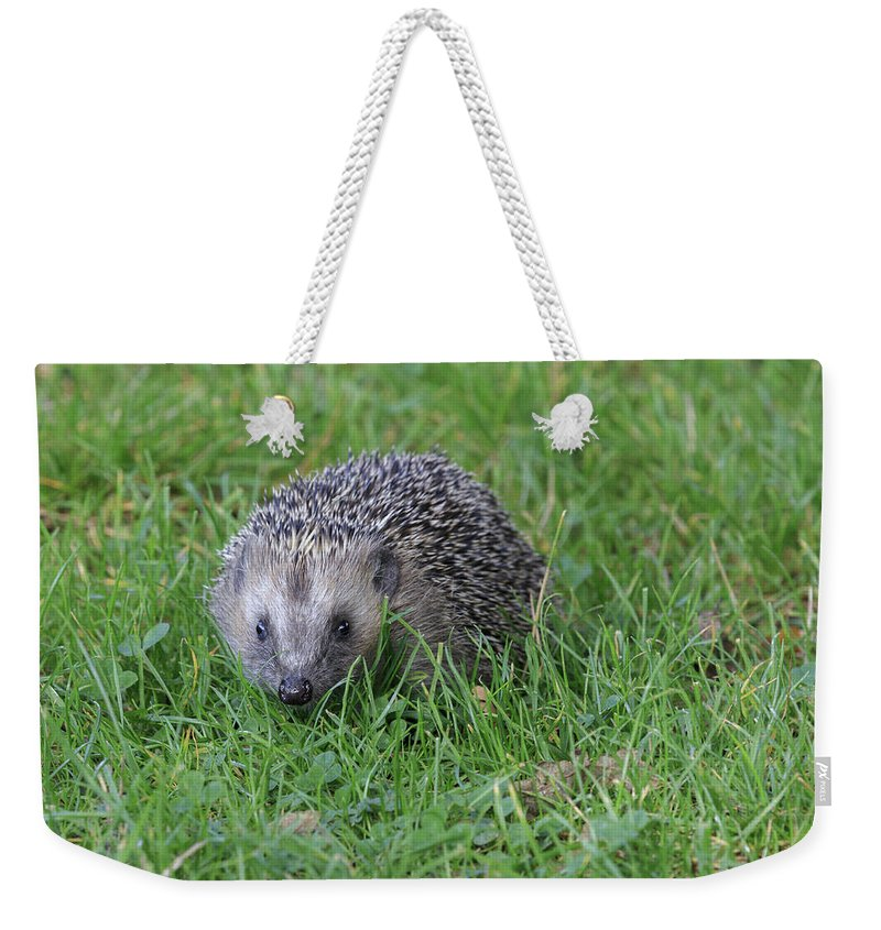Mammal Weekender Tote Bag featuring the photograph Hedgehog by Chris Smith