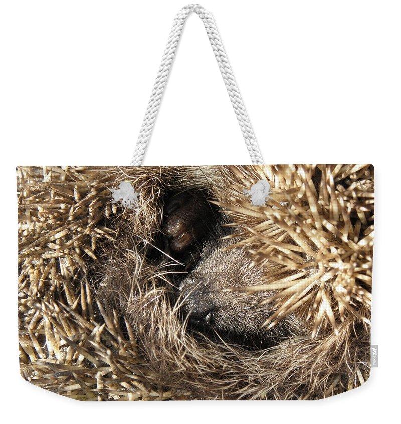 Hedgehog Curled. Background Animal Weekender Tote Bag featuring the photograph Hedgehog Curled Up by Yevhenii Stefaniuk
