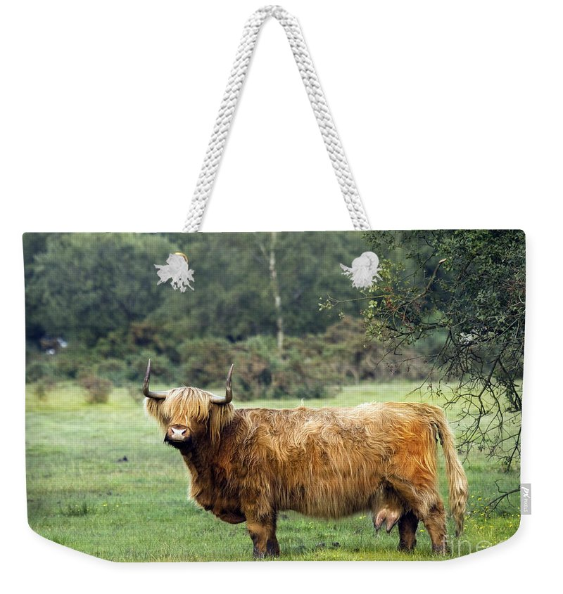 Heilan Coo Weekender Tote Bag featuring the photograph Heilan Coo by Angel Ciesniarska