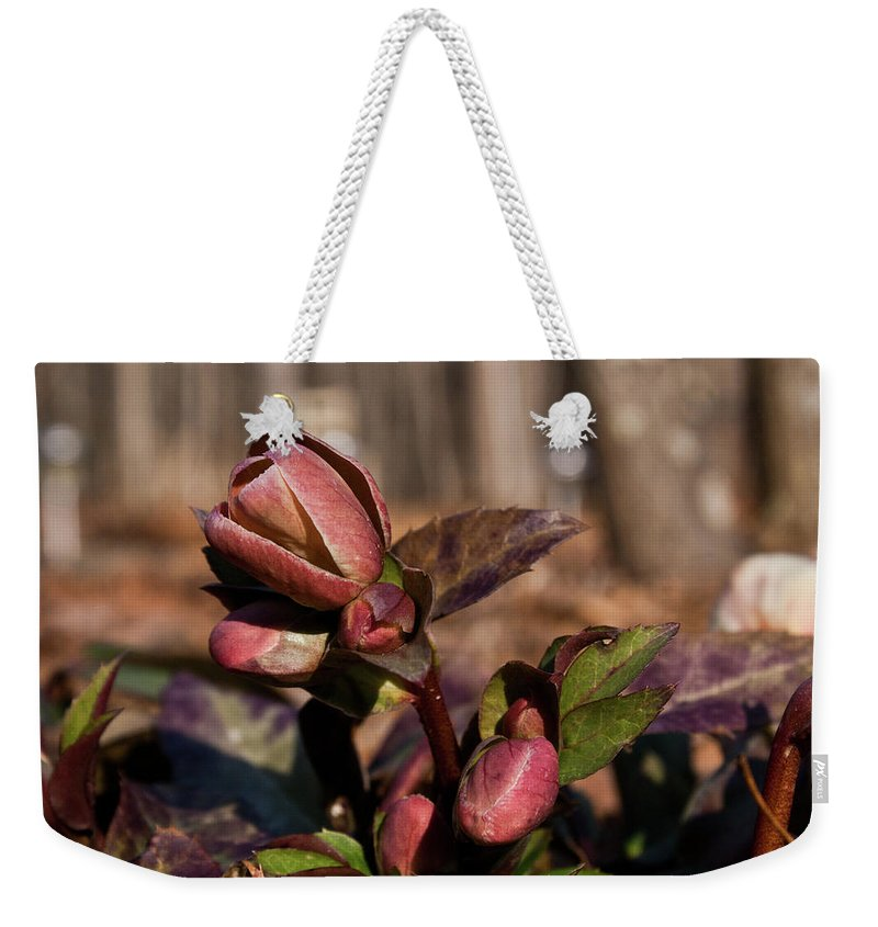 Heliborus Weekender Tote Bag featuring the photograph Heliborus Early Flower Buds 2 by Douglas Barnett
